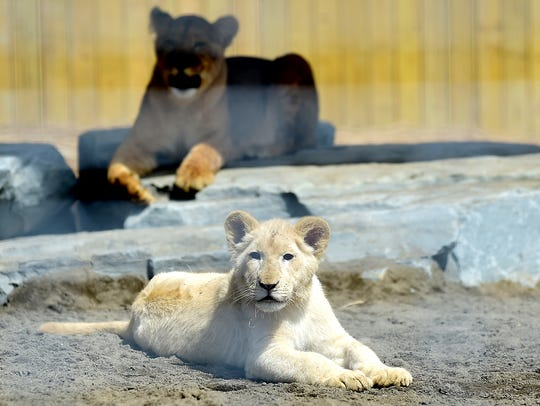 New to Animal Adventure Park this year are two young