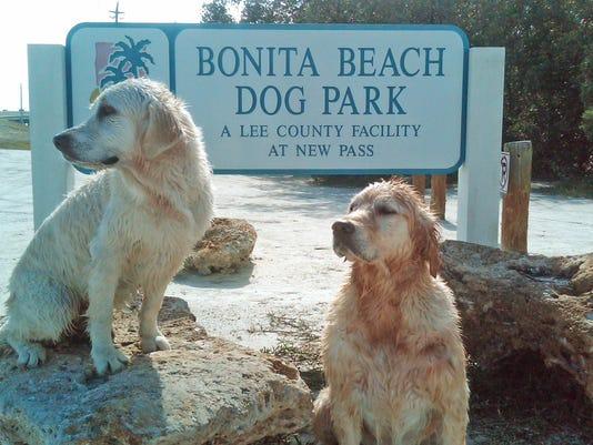 dogs-at-dog-beach