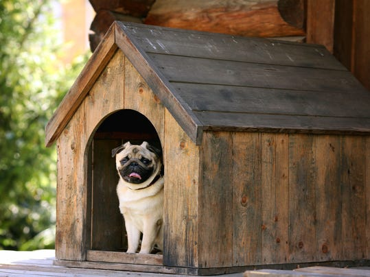 buzz doghouse.jpg