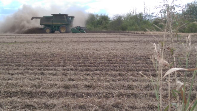 Sonny Kirby's combine kicks up a cloud of dust on their farm north of Shreveport.  It's more dust and dirt than beans, as yields have been less than one-fifth of what they were this time last year.