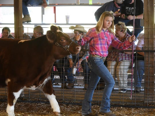 Allyson Morrison, 14, of Mountain Home leads her cow, Mabel, at the Baxter County Fair on Thursday.