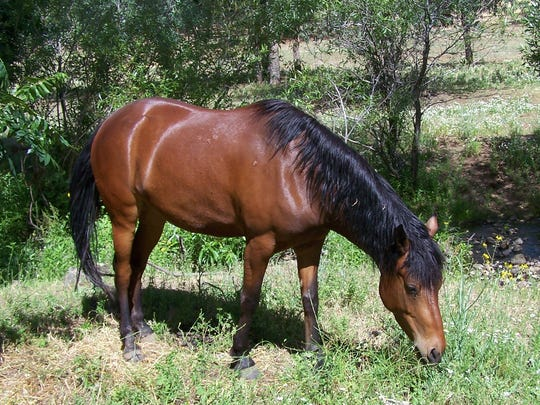 Jewel is one of the equine residents of the Wild Horse Sanctuary in Shingletown.