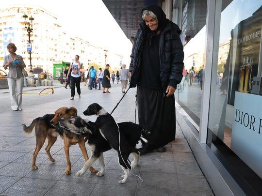 Romania dogs