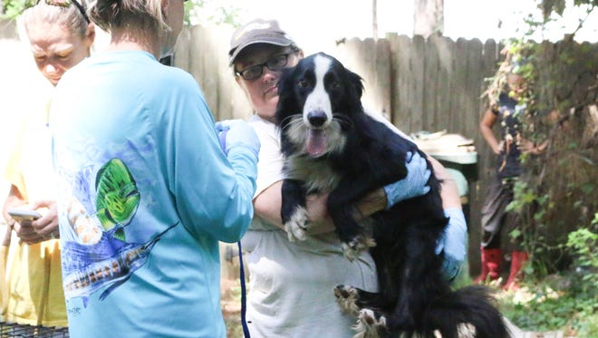 A woman from the Alaqua Animal Refuge in Freeport holds a border collie rescued from a Gulf Breeze home on Friday, Aug. 18, 2017. The dog was one of approximately 20 border collies and 15 cats taken from the home of an elderly woman who could no longer care for the animals. The animals will be treated and put up for adoption by Alaqua Animal Refuge.