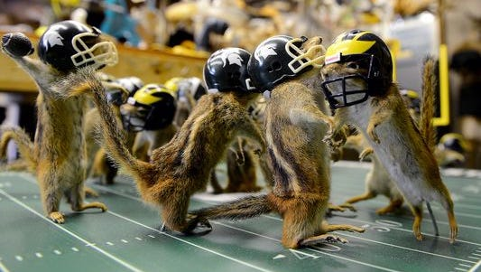 """The quarterback is poised to pass the winning touchdown as 21 other stuffed chipmunks """"play"""" an MSU vs. U-M football game. Wednesday, July 29, 2015, in Nick Saade's taxidermy shop in Lansing."""