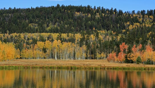 Yellow aspens reflect in Duck Lake near Duck Creek