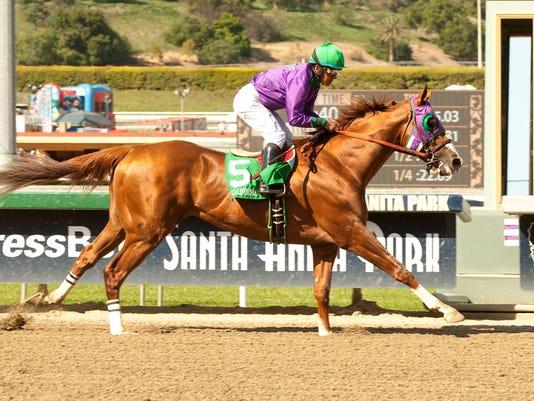 2014-04-07 California Chrome wins santa anita derby