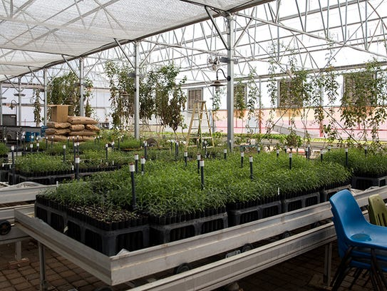 The Phoenix Desert Botanical Garden leases three tables