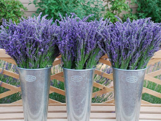 6/30-7/3: Lavender Festival at Red Rock Farms