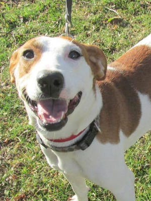Finny is available for adoption at Animal Welfare League.