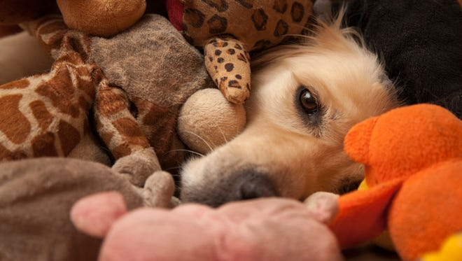 Younger owners of pets have been spending more on their favorite furry friends.