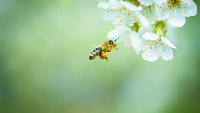 """Avoid other people, or they will also be attacked. Once stung, you are a """"marked"""" target. Bee stings are delivered with a pheromone that labels you as a threat and incites other defensive bees to sting."""