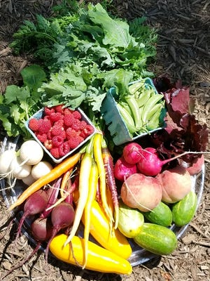 Valley Crest Farm & Preserve will kick off its new neighborhood Farmer's Market at the Orchards entrance to the farm, 14 Allerton Road, Lebanon, on Saturday, July 8. The grand opening will have music, vendors, activities for kids, farm tours and more. The market will be held from 10 a.m. to 2 p.m. every Saturday and Wednesdays from 9 a.m. to 4 p.m. through Nov. 1.