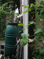 A downspout empties into a rain barrel that feeds a