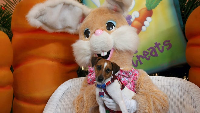 The Easter Bunny will take photos with dogs and cats from 5-7 p.m. Tuesday, March 14 at La Palmera mall, 5488 South Padre Island Drive.