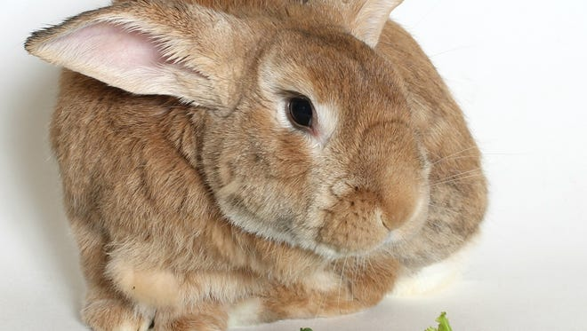 I'm Phoenix -- I  truly rose from the ashes to become a  bunny on a mission to find a forever home.