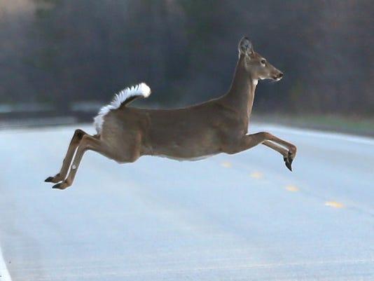 635912969558908349-deer-jumping-DFP-locgrey-0819-2-1-1-RIBLONU5-L661119042.JPG