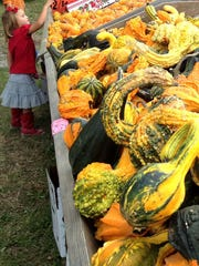 Purchase pumpkins and colorful gourds at farms such