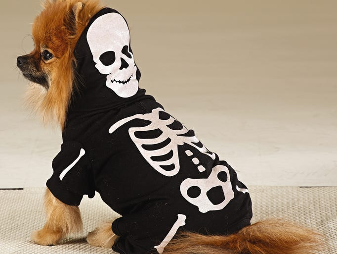 A creepy glow-in-the-dark skeleton costume for dogs from Martha Stewart Pets.