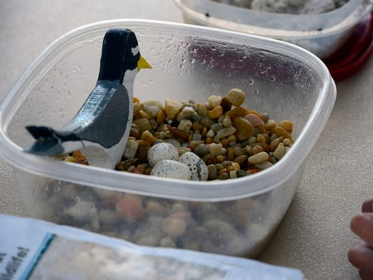 Kids learn about Least Terns during last year's Sea