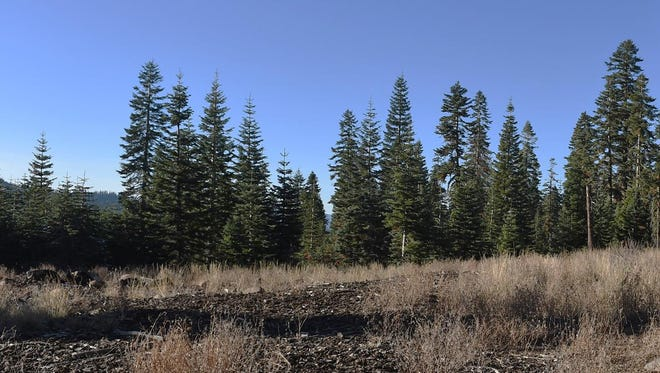 An area near Northstar California is the site of a proposal for a new Tahoe campground.