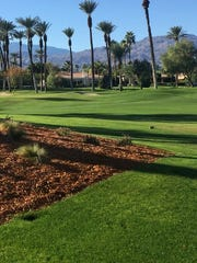 Wood chips and shrubs have replaced and bunker to the