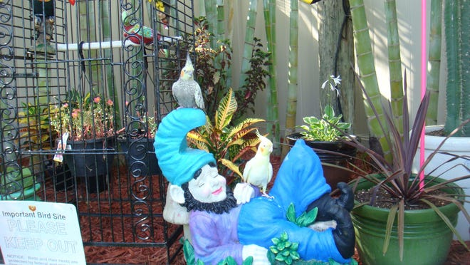 Chirpels and Princess enjoy their garden in southwest Cape Coral.