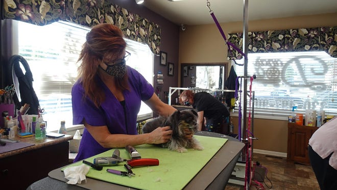 Dana Neading, owner of Dana's Dog Spa on Wise Avenue in North Canton, trims Sassy's nails. The spa just reopened and are they are getting all their regulars cut and trimmed up.