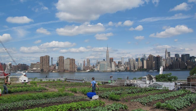 A rooftop garden on Eagle Street in Brooklyn, with Manhattan in the distance.