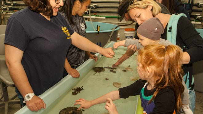 Children and parents eagerly dip their hands in the touch tank as graduate students teach them what each marine specimen is, Sunday, May 22, 2016, in Sandy Hook, New Jersey. (Contributor: EvaJo Alvarez)
