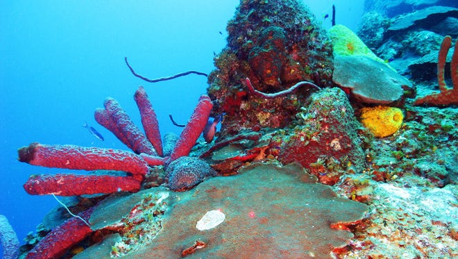 Forty-three dives resulted in almost 20,000 underwater photographs of the never-before-studied mesophotic coral reefs during a month-long circumnavigation of the entire coast of Cuba.