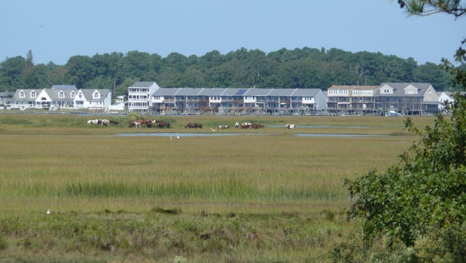 The wild pony herds of Chincoteague can be easily viewed.