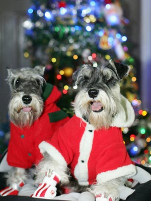 Take special precautions with pets and holiday decorations, a reader advises.