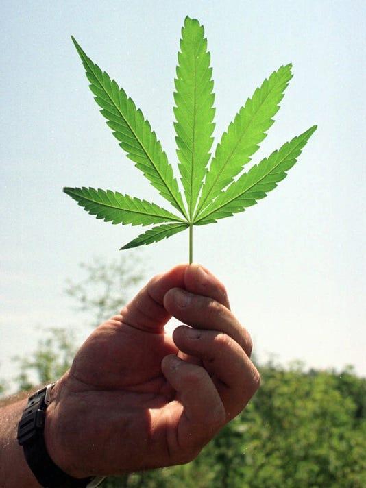 636258167982894526-marijuana-17.JPG