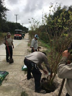 Rockport Parks and Leisure Services Department employees Joe Samora, Steve Arocha, Fidel Garcia and Juan Corado planted 30 trees along the Tule Hike & Bike Trail.