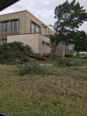 A tree is split in pieces on the Del Mar College main