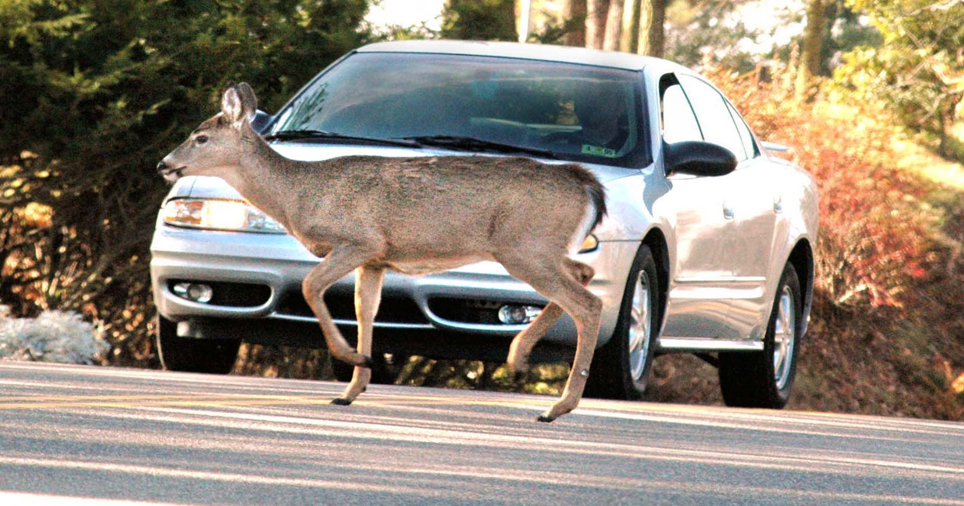 What To Do If You're About To Hit A Deer With Your Car