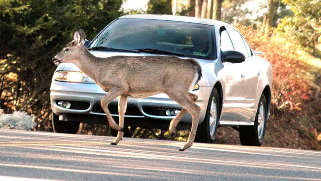A motorist comes to a complete stop on West Virginia 88 in Wheeling, W.Va., as a doe crosses the road in November 2004.