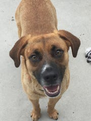 Forest is a 3-year-old hound mix, who is a medium-sized