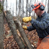 In this 2011 photo, forester Jeff Wiegert of the New York State Department of Environmental Conservation removes emerald ash borer larvae from an ash tree at Esopus Bend Nature Preserve in Saugerties, N.Y.
