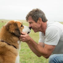 'A Dog's Purpose' reels after outrage over disturbing set video