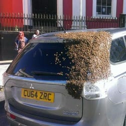 A swarm of bees covered the rear quarter of this Mitsubishi Outlander.
