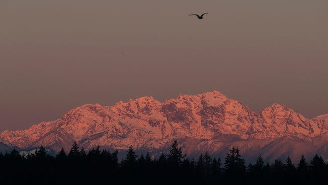 The sunrise coats the Olympic Mountains on Thursday morning, as seen from Lions Park in Bremerton.