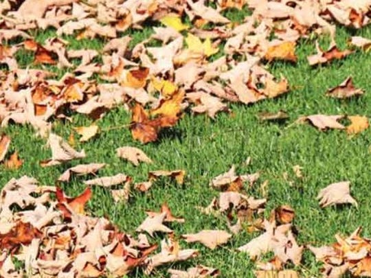 Fallen leaves are full of good things for your lawn