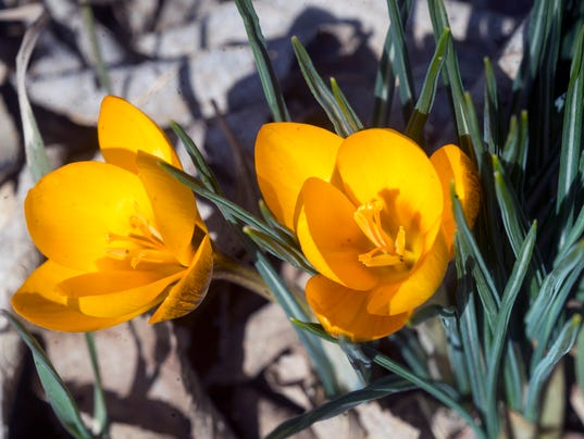 2-YDR-pmk-021417-signs of spring