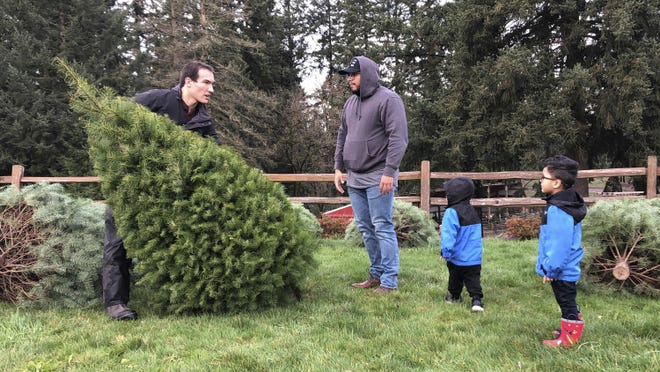 In this Thursday, Nov. 29, 2018, photo, Tommy Lee, a sixth-generation tree farmer at Lee Farms in Tualatin, Ore., helps Jason Jimenez and his sons carry the Douglas fir they selected off the tree lot. Christmas tree farmers nationwide are paying a fee to the Christmas Tree Promotion Board for each tree harvested to fund a social media ad campaign aimed at convincing young families to buy real trees instead of artificial ones. (AP Photo/Gillian Flaccus)