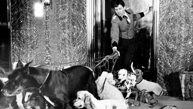 "Jerry Lewis goes to the dogs in ""The Bellboy."""