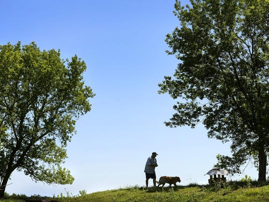 Dan Stark-Haws and dog, Rusty, walk into the pasture to check on the sheep July 23 at Bannockburn Farm, a certified organic farm in rural Cold Spring.