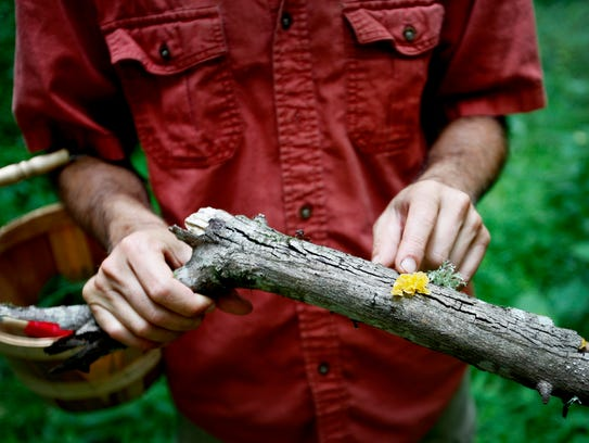 """Alan Muskat identifies """"Witches Butter,"""" a common,"""