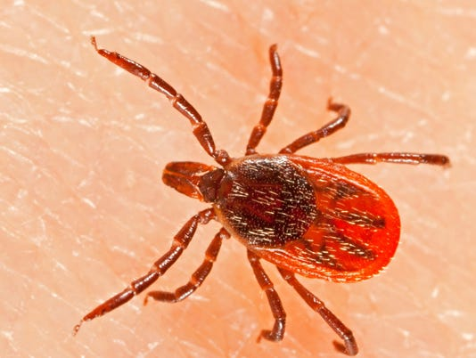New Lyme disease estimate: 300,000 cases a year